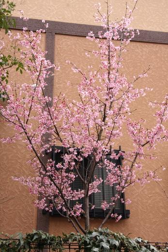 10-03桜9358.JPG